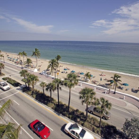 florida beaches with palm trees. Palm Trees sway gently in the