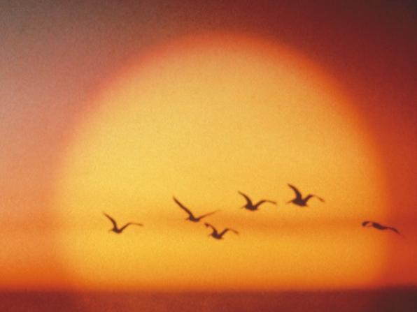 Sunset with Gulls