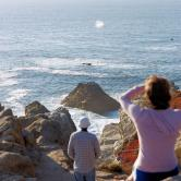 CA Whale watching from coast.jpg