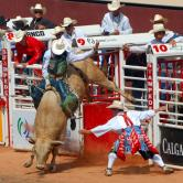 YYC Bull-Riding-Szmurlo[1]