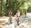 Cyclists through wooded area