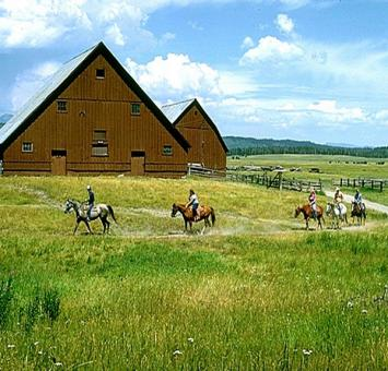 Horse trekking and barns ID
