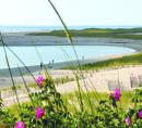 Floral view of Cape Cod beach