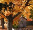 fall foliage NEng