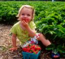 strawberry picking RI