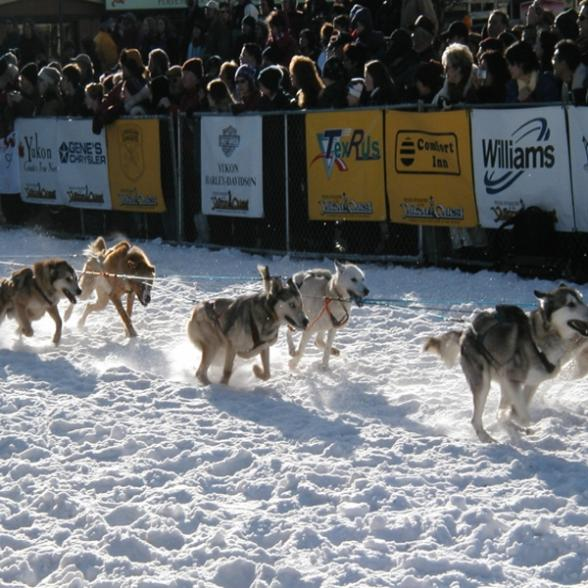an overview of the idatarod a dog sled race across alaska The iditarod trail sled dog race is a 1000-mile trek through alaska from  anchorage to nome warm weather this year meant bare trails and.