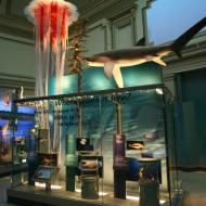 Ocean Hall in Smithsonian