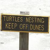 Little St Simons Turtle Sign