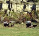 Wagon Train Montana