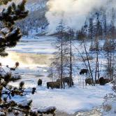 Yellowstone winter landscape .jpg