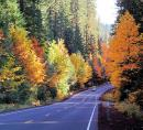 OR road with fall foliage.jpg