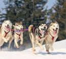 CAN Husky dog sledding.jpg