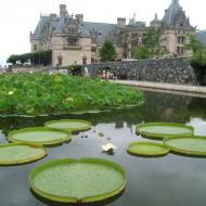 Biltmore Estate with pond